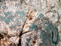 Wood stump with lichen. An old wood stump with small lichen growing Stock Images