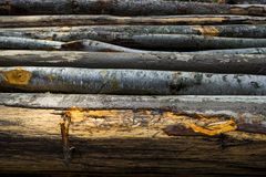 Wood. Stumps from trees in a wood Royalty Free Stock Image