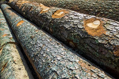 Wood. Stumps from trees in a wood Royalty Free Stock Images