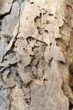 The wood surface damaged by termite royalty free stock image