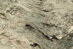 Wood surface oak tree bark old background texture surface Royalty Free Stock Photography