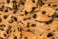Wood surface Stock Images