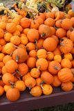 Wood table covered with small orange pumpkins and colorful gourds royalty free stock photo