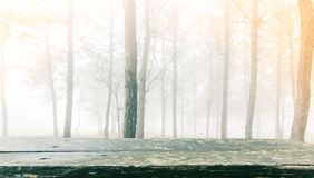 Wood table in forest tree during a foggy day Royalty Free Stock Photos