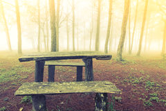 Wood table in forest tree during a foggy day Stock Photo