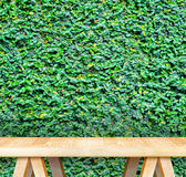 Wood table at green hedge,Template mock up for display of produc Royalty Free Stock Photography