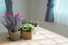Wood table with group of beautiful artificial flower. On pot at living room. lavender flower, sky star flower Stock Photography