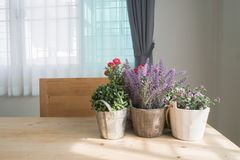 Wood table with copy space and group of beautiful artificial flo Royalty Free Stock Image