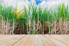 wood table space with sugarcane field Stock Photography