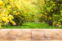 Wood table top on shiny sunlight with blur of orange garden in t Royalty Free Stock Images