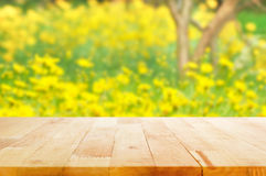 Wood table top on blurred background of yellow flower garden Royalty Free Stock Photos