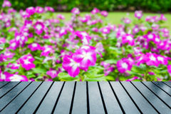 Wood table top on blurred watercress,vinca flower bush. Pink white bloom Royalty Free Stock Images