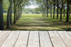 Wood table top on blurry tree lane bokeh abstract background Royalty Free Stock Image