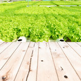 Wood table top on Cultivation hydroponic green vegetable in farm Stock Photo