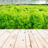 Wood table top on Cultivation hydroponic green vegetable in farm Royalty Free Stock Image