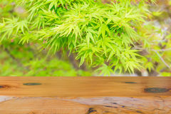Wood table top on green leaf background be used for display obje Stock Photo