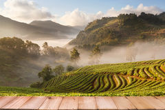 Wood table top on misty morning sunrise in strawberry garden at Stock Image