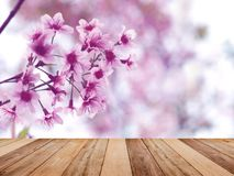 Wood table top over pink cherry blossoms flower in full bloom. Spring season. Montage style to display the product Stock Photos