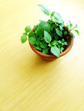 Wood table top and potted green plant stock photos