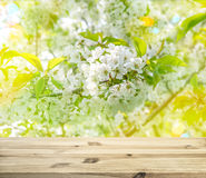 Wood table top on shiny sunlight blossoming of cherry Stock Images