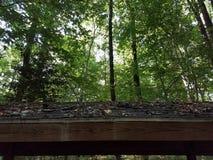 Wood tak i skog Arkivbild