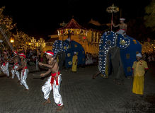 Wood Tappers dance ahead of two ceremonial elephants during the Esala Perahera in Kandy, Sri Lanka. Royalty Free Stock Image