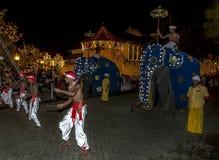 Wood Tappers dansar framåt av två ceremoniella elefanter under Esalaen Perahera i Kandy, Sri Lanka Royaltyfri Bild