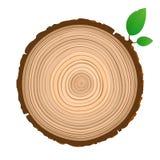 Wood teckensymbolstvärsnitt av stammen med trädcirklar royaltyfri illustrationer