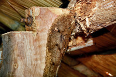 Wood termites to invade the building. Stock Image