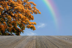 Wood terrace and Peacock Flower with Rainbow Stock Image