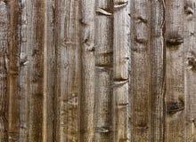 Wood textur Royaltyfria Foton