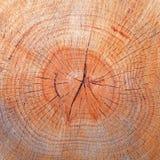 Wood textur Fotografering för Bildbyråer