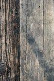 Wood textur av cutted trädplankor Mossa och svamp som växer på t Royaltyfri Bild