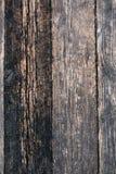 Wood textur av cutted trädplankor Mossa och svamp som växer på t Royaltyfria Bilder