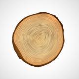 Wood textur av den cutted trädstammen Royaltyfri Fotografi