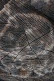 Wood textur av den cutted trädstammen Mossa och svamp som växer på th Arkivfoto