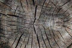 Wood textur av den cutted trädstammen Mossa och svamp som växer på th Royaltyfri Fotografi