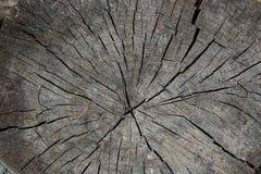 Wood textur av den cutted trädstammen Mossa och svamp som växer på th Arkivbild
