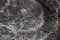 Wood textur av den cutted trädstammen Mossa och svamp som växer på th Royaltyfria Bilder