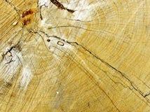 Wood textur av den cutted trädstammen, närbild Royaltyfria Bilder