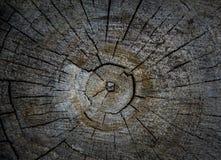 Wood textur av den cutted trädstammen, närbild Royaltyfri Fotografi