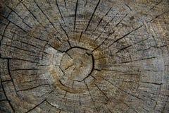 Wood textur av den cutted trädstammen, närbild Arkivfoto
