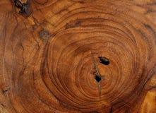 Wood textur av den klippta trädstammen, Royaltyfri Fotografi