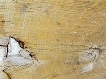 Wood textur av den klippta trädstammen, närbild Royaltyfri Bild