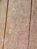 Wood textur för aska Arkivfoton