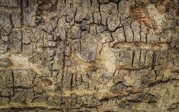Wood textur för skäll Royaltyfri Fotografi