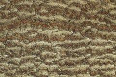 Wood textur för skäll Royaltyfria Foton