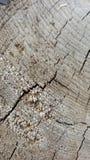 Wood textur för spricka abstrakt textur Royaltyfri Bild