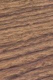 Wood textur för valnöt arkivfoto