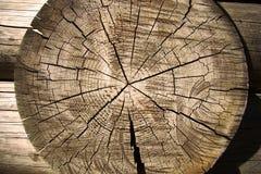 Wood textur i modeller och sprickor Arkivfoto